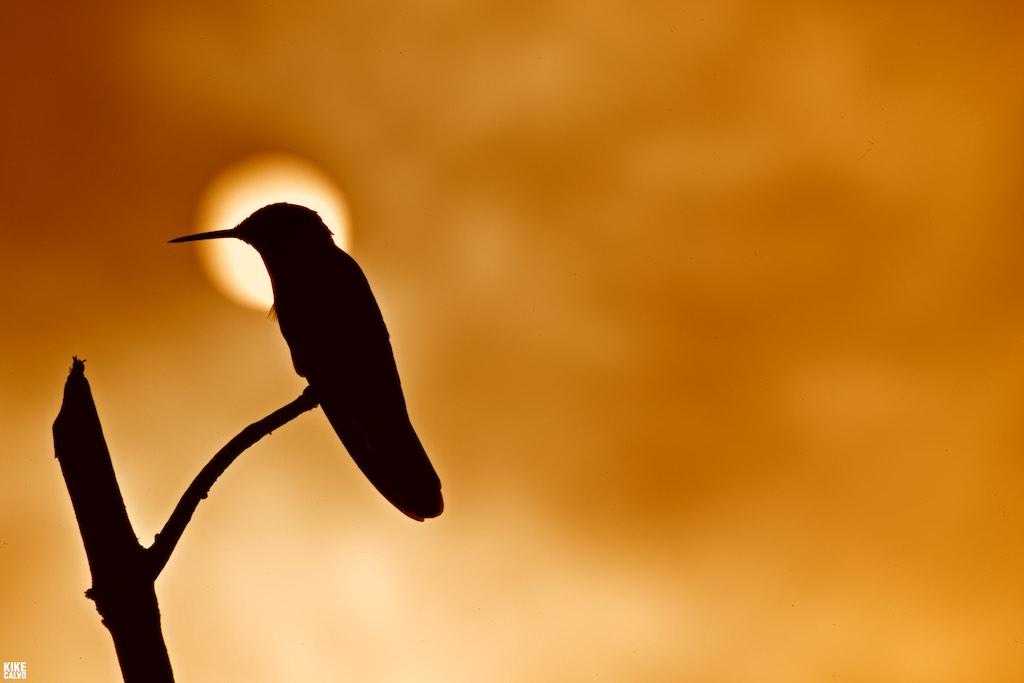观鸟者纪录片摄影探险队 ( The Birders Expedition )