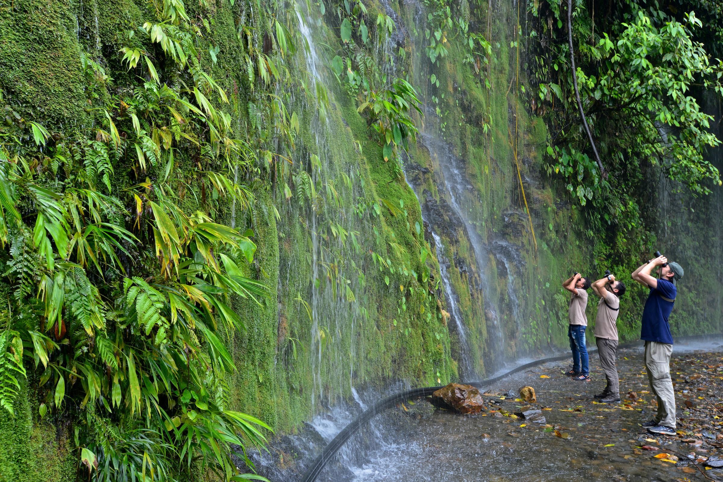 Colombia: Top Birds of the Choco Region 🎥 Birdwatching | Episode 3